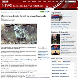 Cashmere trade threat to snow leopards