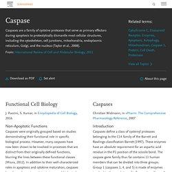 ScienceDirect Topics