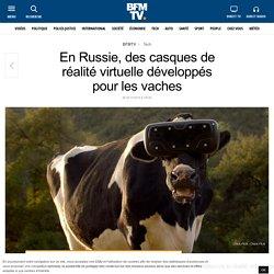 En Russie, des casques de réalité virtuelle développés pour les vaches