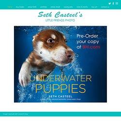 Seth Casteel / Underwater Dogs / Underwater Puppies