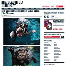 Seth Casteels Underwater Dogs Signed Book & Print Giveaway! | Beautiful/Decay Artist & Design - Vimperator