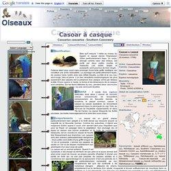 Casoar à casque - Casuarius casuarius - Southern Cassowary