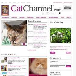 Cats, Cat Breeds, Cat Breeders & Cats for Sale