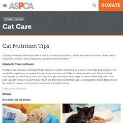 Cat Nutrition Tips
