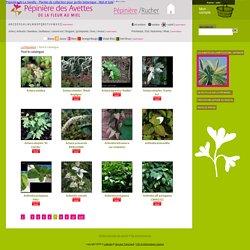 Tout le catalogue - Plantes de collection et plantes rares - Pépinière des Avettes, de la fleur au miel - plantes de collection et produits de la ruche, jardin botanique