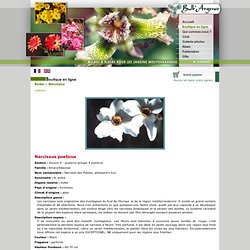Catalogue de vente en ligne bulbes à fleurs pour les jardins méditerranéens