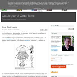 Catalogue of Organisms: More Giant Larvae