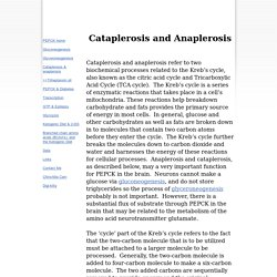 cataplerosis and anaplerosis