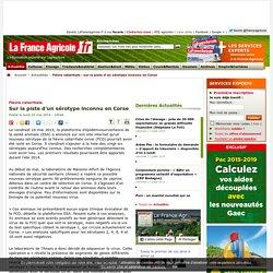 Fièvre catarrhale : sur la piste d'un sérotype inconnu en Corse