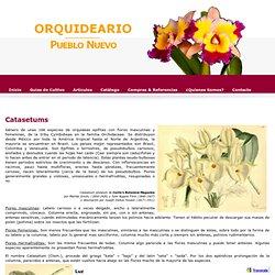 Catasetum - Orquideario Pueblo Nuevo