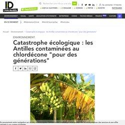 """Les Antilles contaminées au chlordécone """"pour des générations"""""""