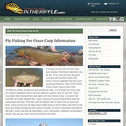 Grass Carp Fly Fishing Information