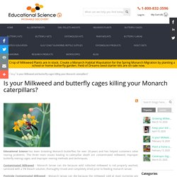 Is your Milkweed and butterfly cages killing your caterpillars