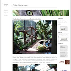 Catio Showcase