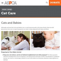 Cats and Babies
