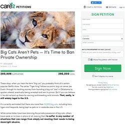 texte de la pétition: Big Cats Aren't Pets — It's Time to Ban Private Ownership