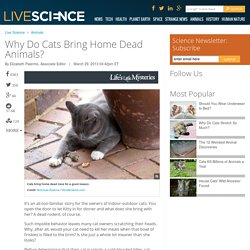 Why Do Cats Bring Home Dead Animals