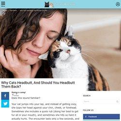 Why Cats Headbutt, And Should You Headbutt Them Back?