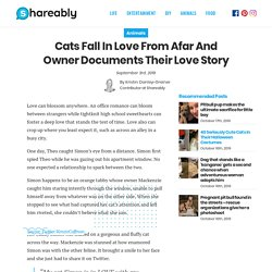Cats fall in love from afar and owner documents their love story