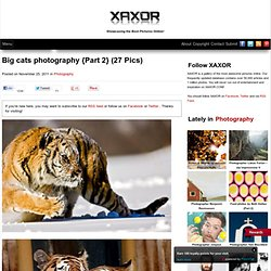Big cats photography