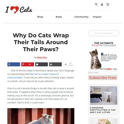 Why Do Cats Wrap Their Tails Around Their Paws?