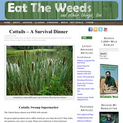 Cattails – A Survival Dinner