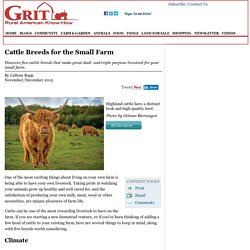 Cattle Breeds for the Small Farm - Animals