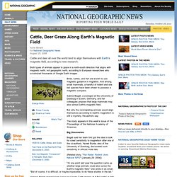 Cattle, Deer Graze Along Earth's Magnetic Field