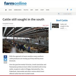 Cattle still sought in the south