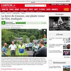 LA DEPECHE 11/09/14 La berce du Caucase, une plante venue de l'Est, éradiquée