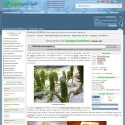Caulerpa lentillifera