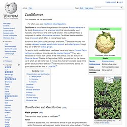 WIKIPEDIA – Cauliflower.