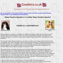 Cavalier King Charles Spaniels in the UK- articles