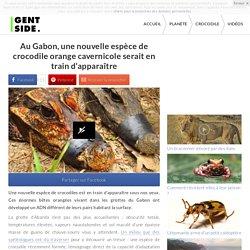 Au Gabon, une nouvelle espèce de crocodile orange cavernicole serait en train d'apparaître
