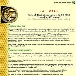 CD ROM Leclercq - La cire d'abeilles