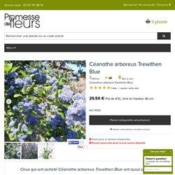 Le Céanothe arboreus Trewithen Blue, arbuste parfumé à fleurs d'un bleu profond