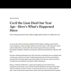 Cecil the Lion Died One Year Ago—Here's What's Happened Since