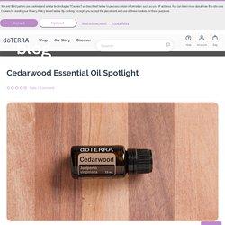 Cedarwood Oil Spotlight