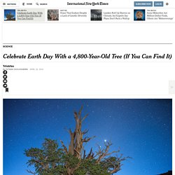 Celebrate Earth Day With a 4,800-Year-Old Tree (If You Can Find It)