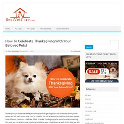 How To Celebrate Thanksgiving With Your Beloved Pets?