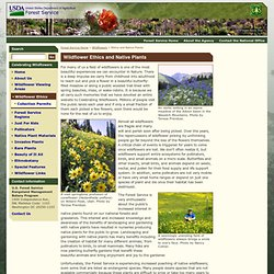 Celebrating Wildflowers - Ethics and Native Plants