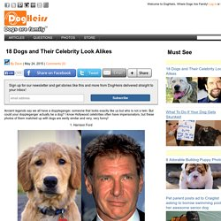 18 Dogs and Their Celebrity Look Alikes