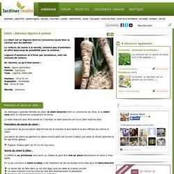 Celeri : semis, culture, recolte