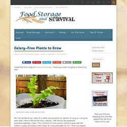 Celery--Free Plants to Grow - Food Storage and Survival