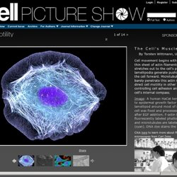 cell_picture_show-cellmotility