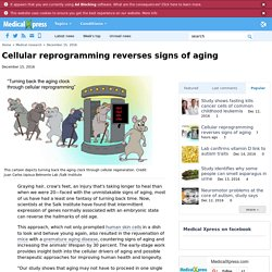 Cellular reprogramming reverses signs of aging