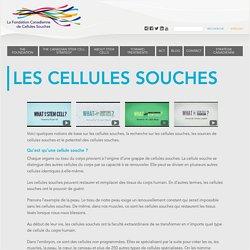 La Fondation canadienne de cellules souches