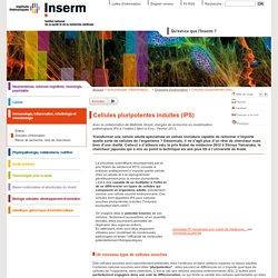Cellules pluripotentes induites (IPS)