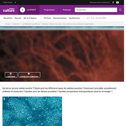 Cellules souches : les prémices de la médecine régénérative
