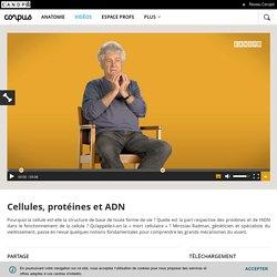 Cellules, protéines et ADN